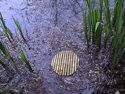 rond dans l'eau